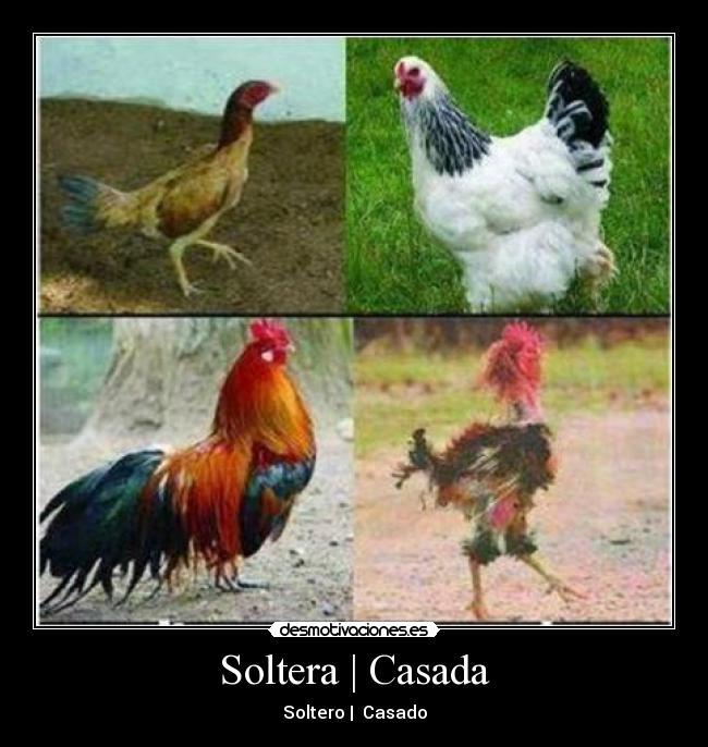 Fiesta Para Solteros 463844